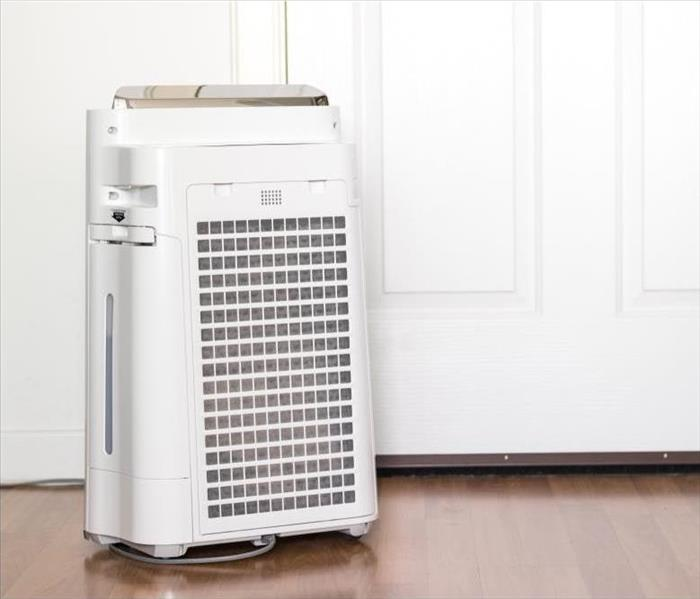 Mold Remediation The Best Air Purifiers for Reducing Mold