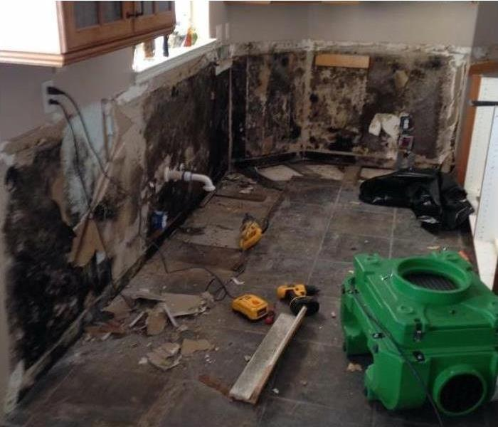 Mold Remediation 7 Ways To Minimize the Risk of Mold Damage