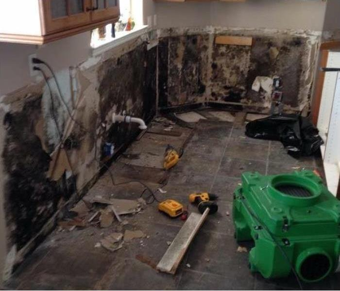 Mold Remediation How Can I Find Out If I Have Mold?